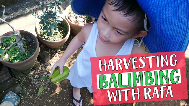 Harvesting Balimbing With Rafa Cover